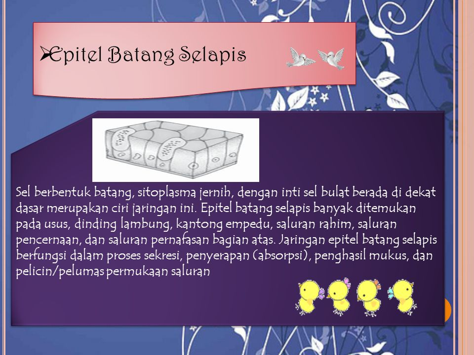 Epitel Batang Selapis