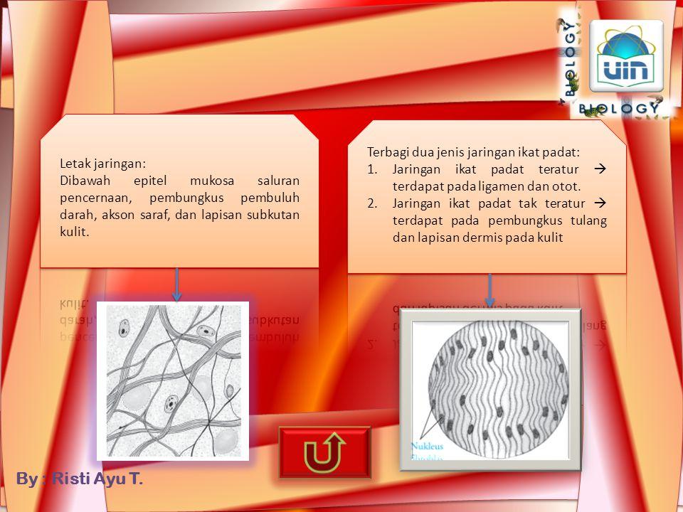 Letak jaringan: Dibawah epitel mukosa saluran pencernaan, pembungkus pembuluh darah, akson saraf, dan lapisan subkutan kulit.