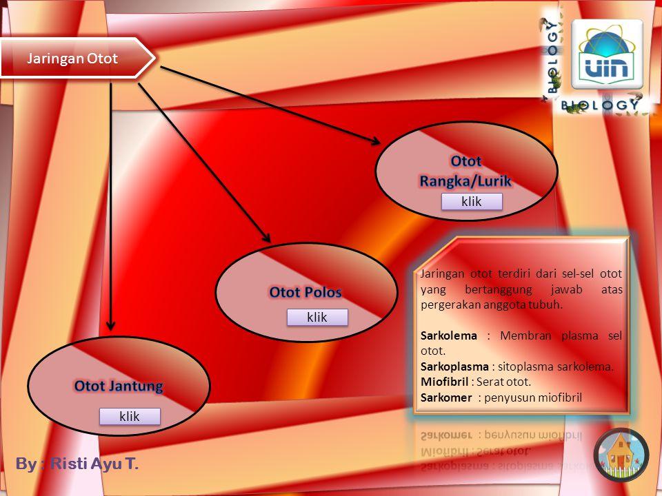 Otot Rangka/Lurik Otot Polos Otot Jantung