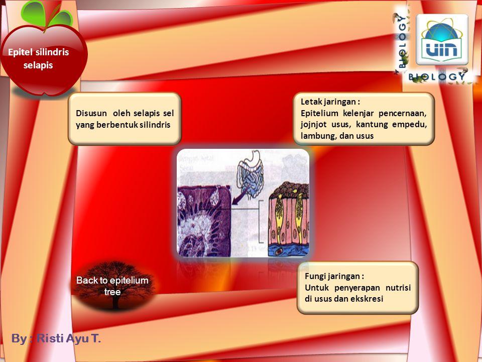 Epitel silindris selapis