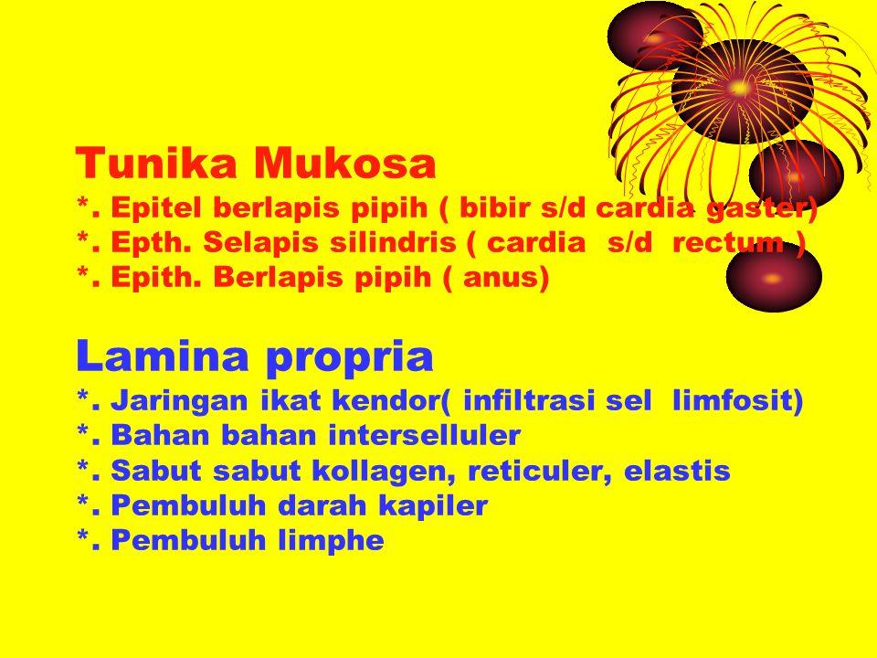 Tunika Mukosa. Epitel berlapis pipih ( bibir s/d cardia gaster). Epth