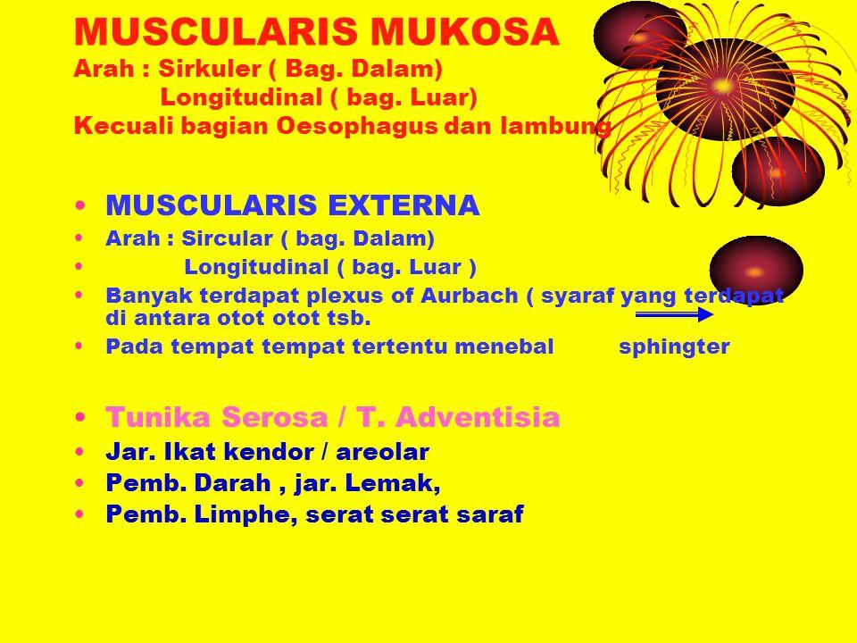 MUSCULARIS MUKOSA Arah : Sirkuler ( Bag. Dalam) Longitudinal ( bag
