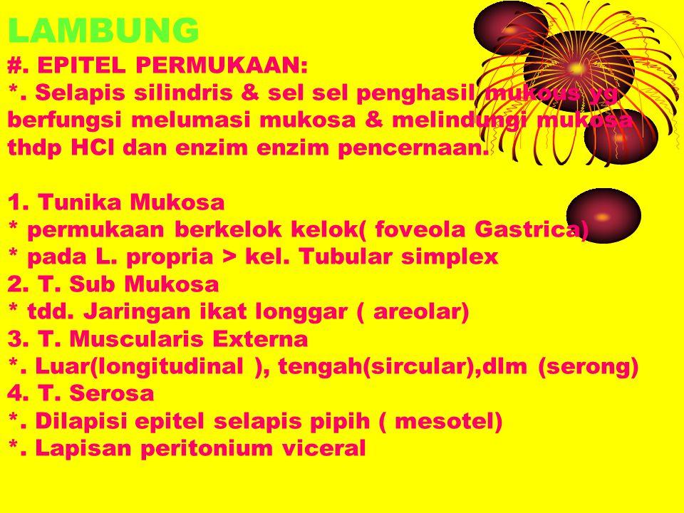 LAMBUNG #. EPITEL PERMUKAAN: