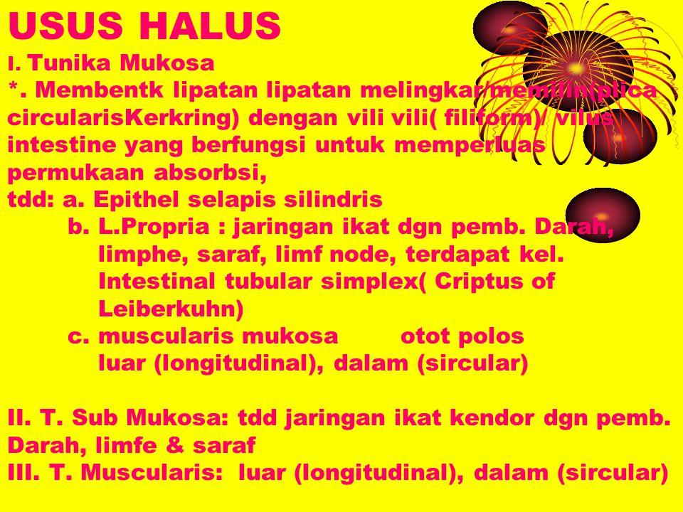 USUS HALUS I. Tunika Mukosa