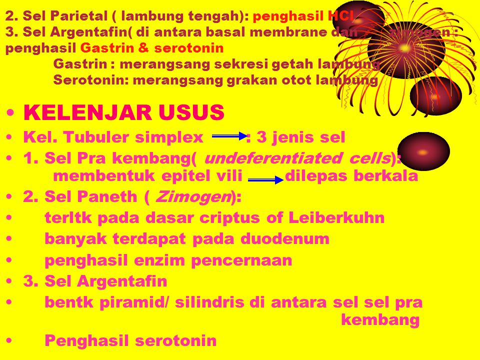 KELENJAR USUS Kel. Tubuler simplex : 3 jenis sel