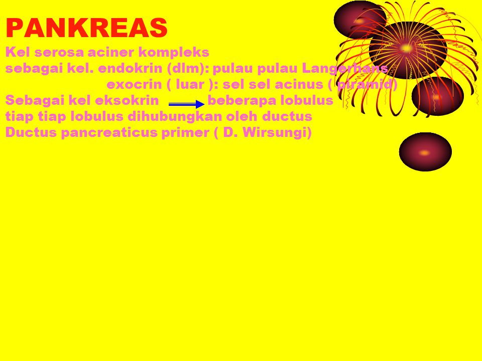 PANKREAS Kel serosa aciner kompleks sebagai kel