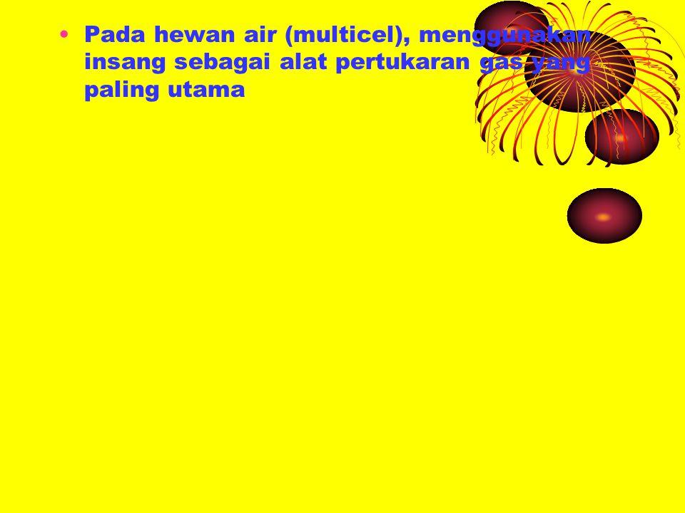 Pada hewan air (multicel), menggunakan insang sebagai alat pertukaran gas yang paling utama