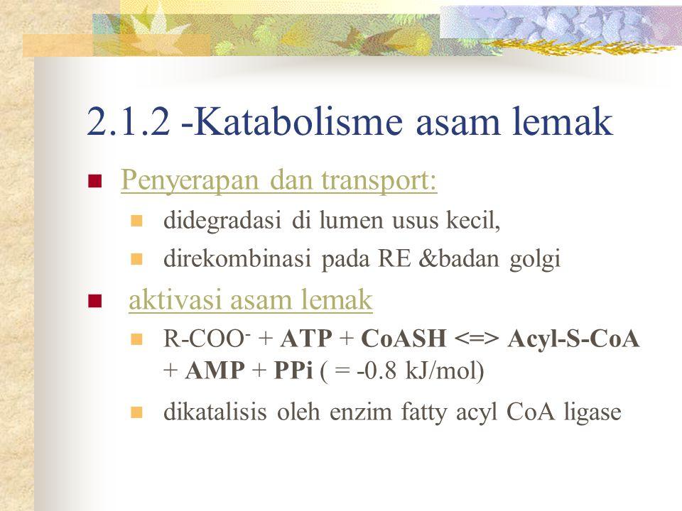 2.1.2 -Katabolisme asam lemak