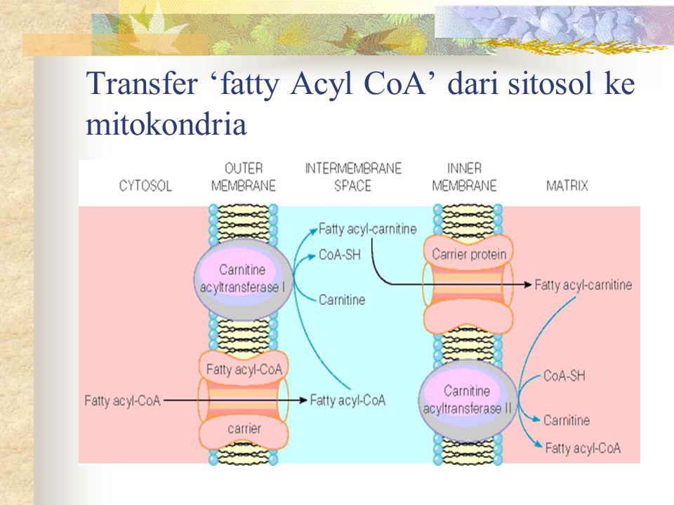 Transfer 'fatty Acyl CoA' dari sitosol ke mitokondria