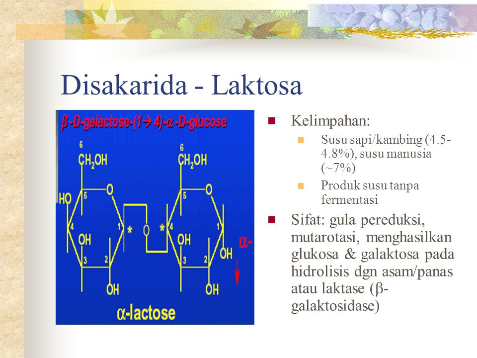 Disakarida - Laktosa Kelimpahan: