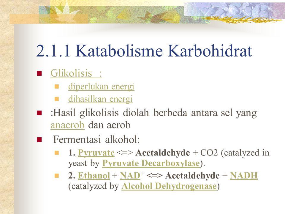 2.1.1 Katabolisme Karbohidrat