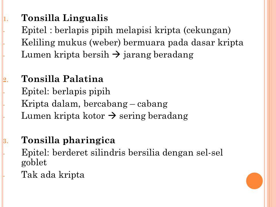 Tonsilla Lingualis Epitel : berlapis pipih melapisi kripta (cekungan) Keliling mukus (weber) bermuara pada dasar kripta.