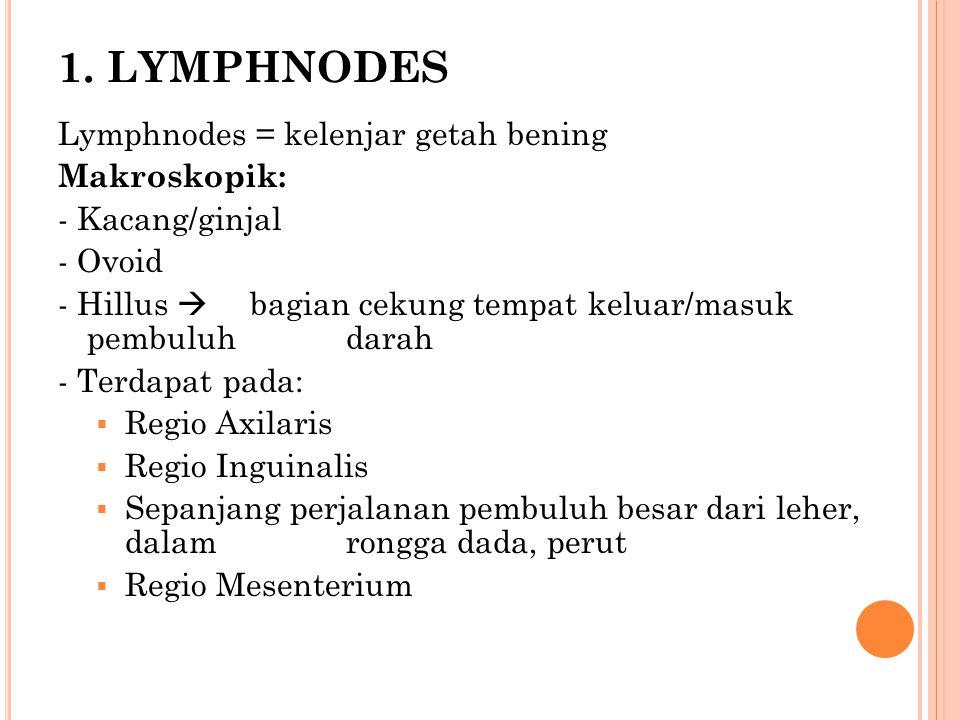 1. LYMPHNODES Lymphnodes = kelenjar getah bening Makroskopik: