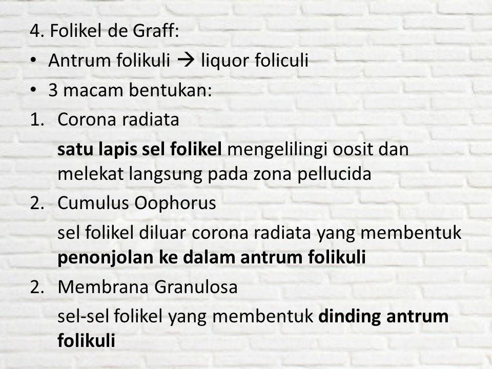4. Folikel de Graff: Antrum folikuli  liquor foliculi. 3 macam bentukan: Corona radiata.