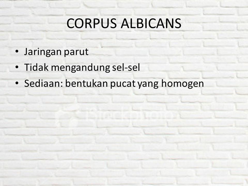 CORPUS ALBICANS Jaringan parut Tidak mengandung sel-sel