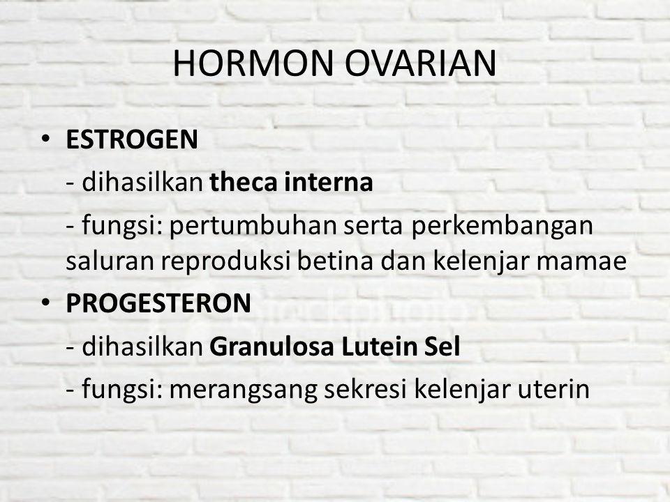HORMON OVARIAN ESTROGEN - dihasilkan theca interna