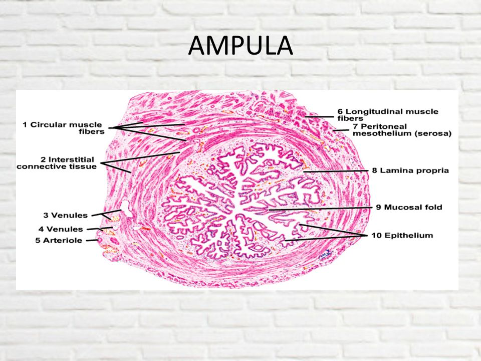 AMPULA