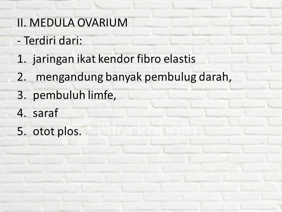 II. MEDULA OVARIUM - Terdiri dari: jaringan ikat kendor fibro elastis. mengandung banyak pembulug darah,