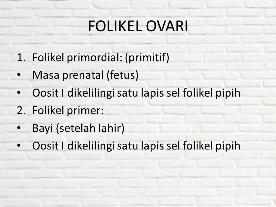 FOLIKEL OVARI Folikel primordial: (primitif) Masa prenatal (fetus)