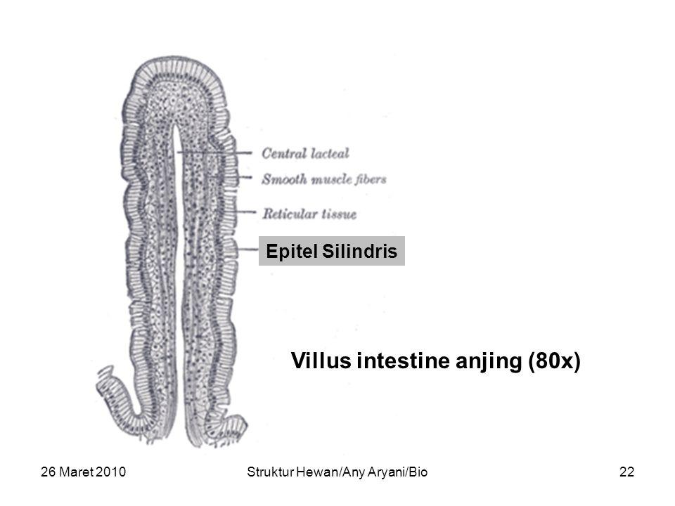 Villus intestine anjing (80x)