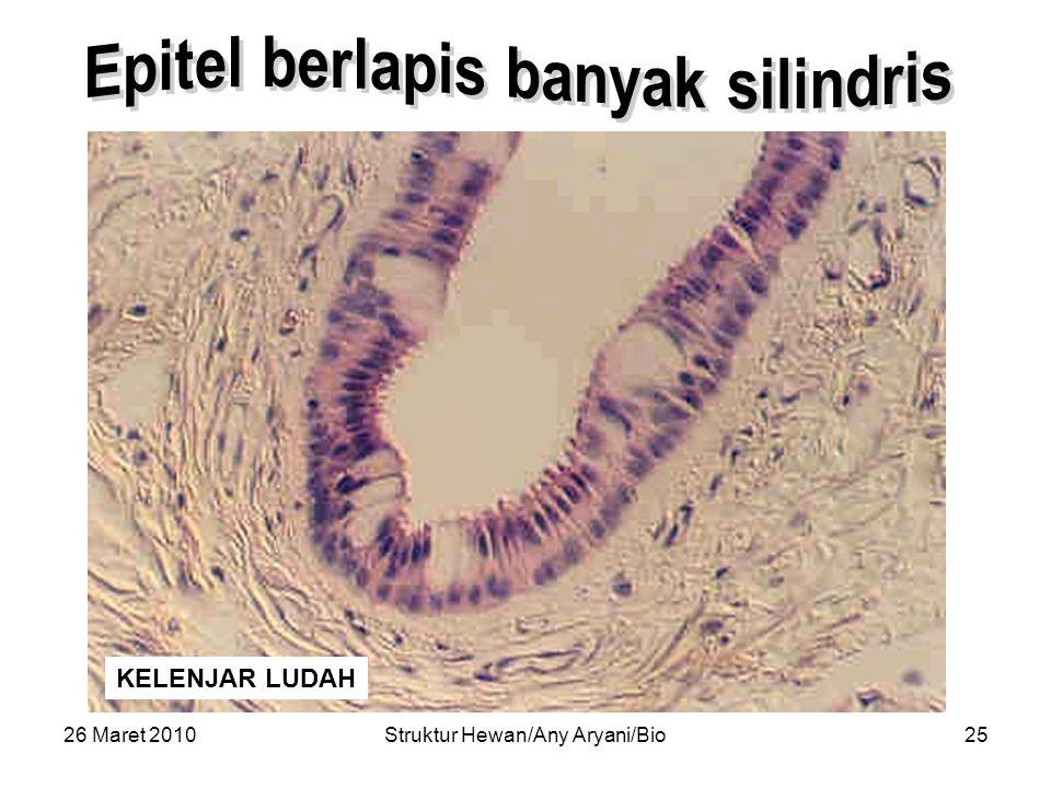 Epitel berlapis banyak silindris