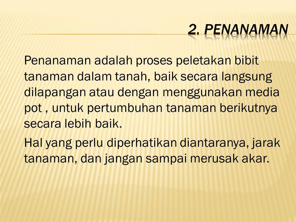 2. Penanaman