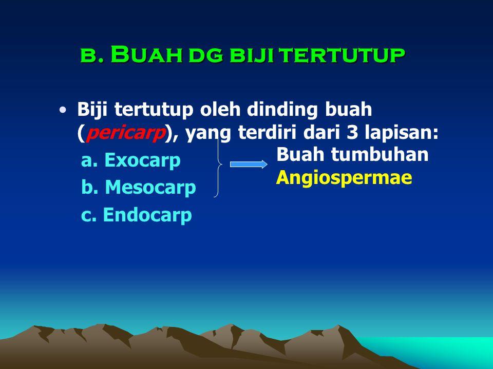 b. Buah dg biji tertutup Biji tertutup oleh dinding buah (pericarp), yang terdiri dari 3 lapisan: a. Exocarp.