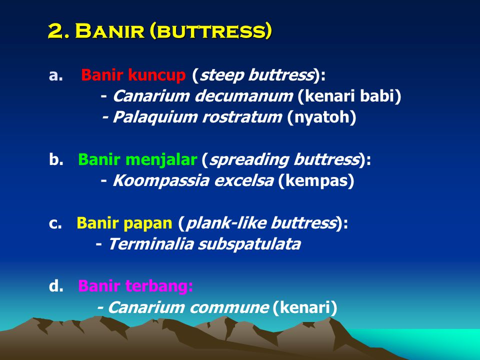 2. Banir (buttress) Banir kuncup (steep buttress):