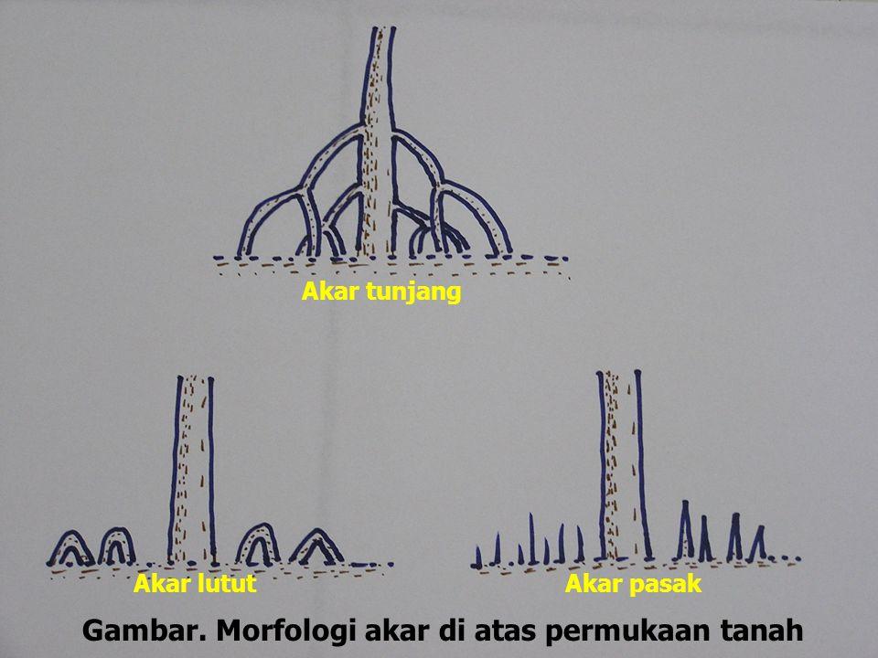 Gambar. Morfologi akar di atas permukaan tanah