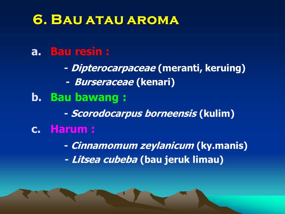 6. Bau atau aroma Bau resin : - Dipterocarpaceae (meranti, keruing)