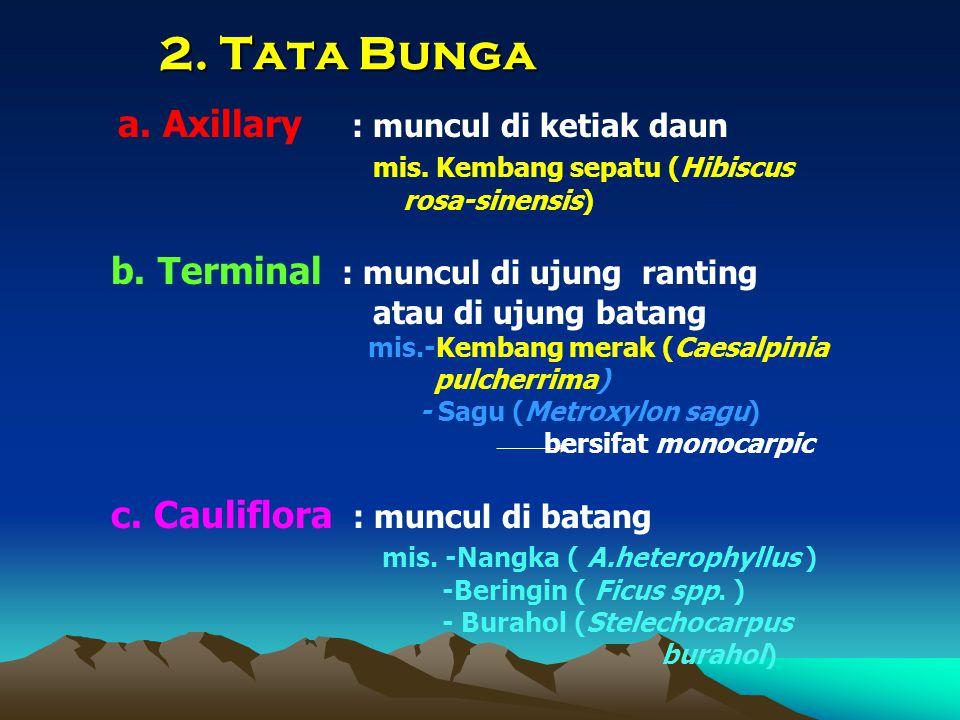 2. Tata Bunga a. Axillary : muncul di ketiak daun