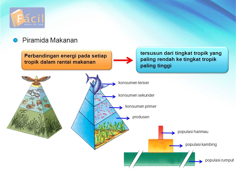 Piramida Makanan tersusun dari tingkat tropik yang paling rendah ke tingkat tropik paling tinggi.