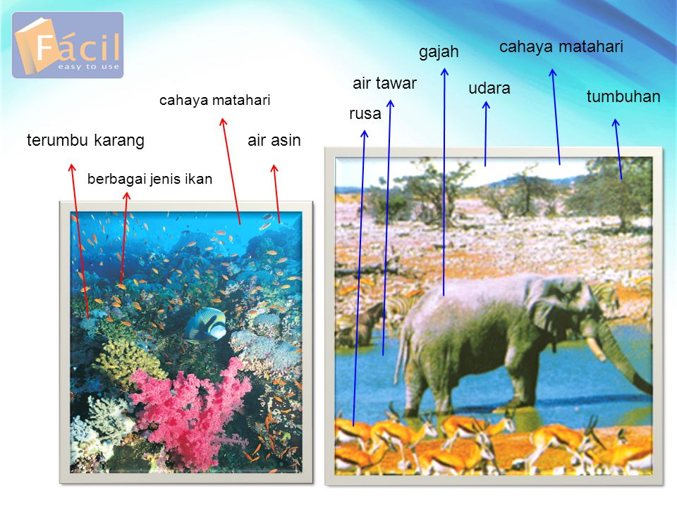 cahaya matahari gajah air tawar udara tumbuhan rusa terumbu karang
