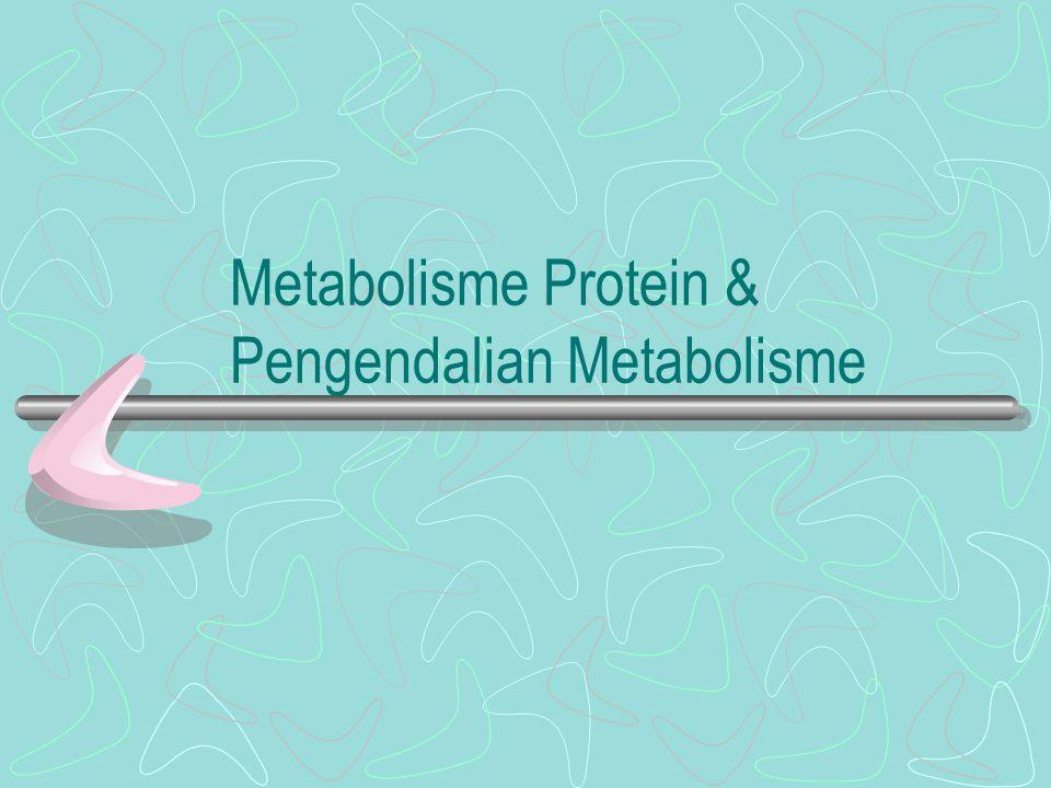 Metabolisme Protein & Pengendalian Metabolisme