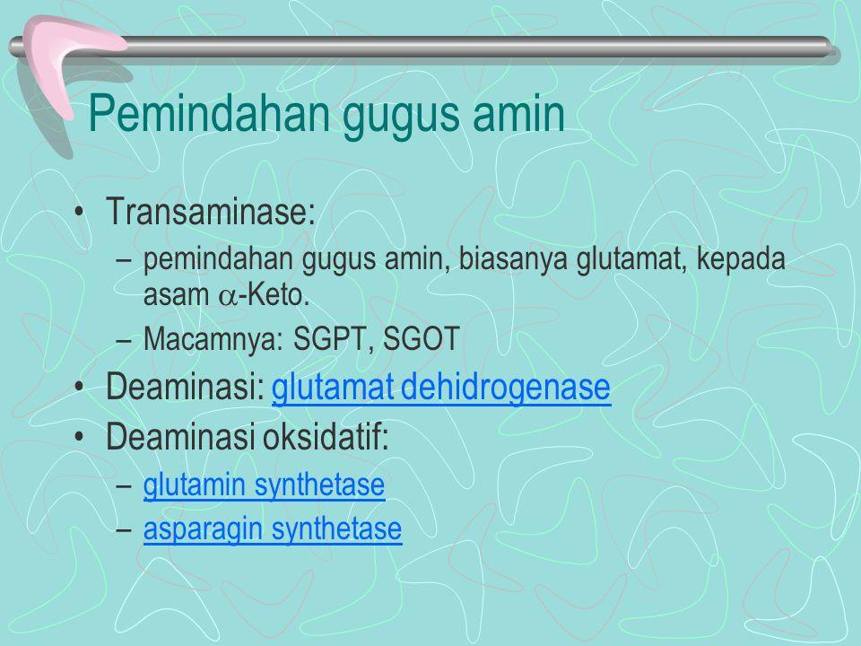 Pemindahan gugus amin Transaminase: Deaminasi: glutamat dehidrogenase