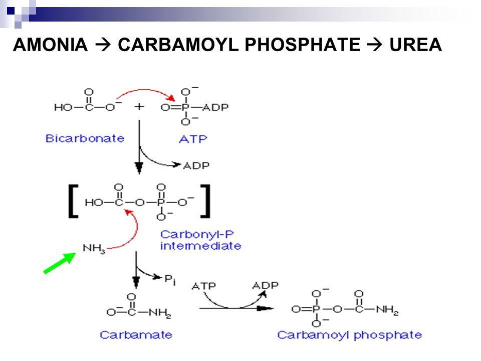 AMONIA  CARBAMOYL PHOSPHATE  UREA