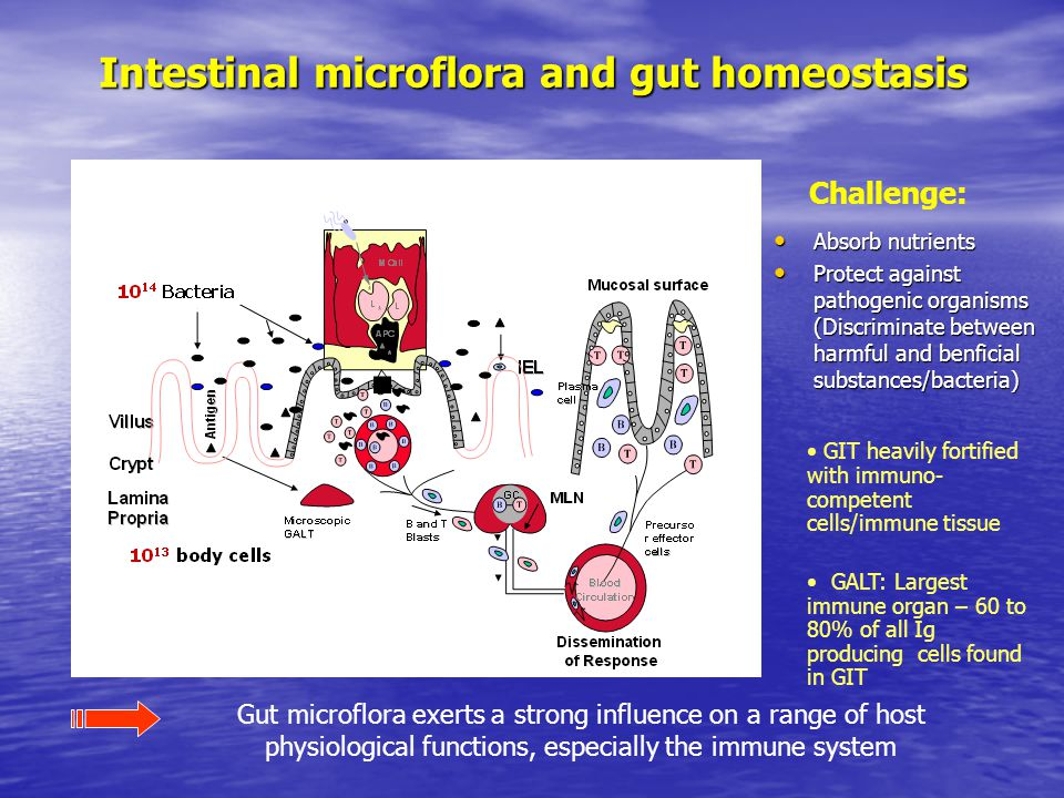 Intestinal microflora and gut homeostasis