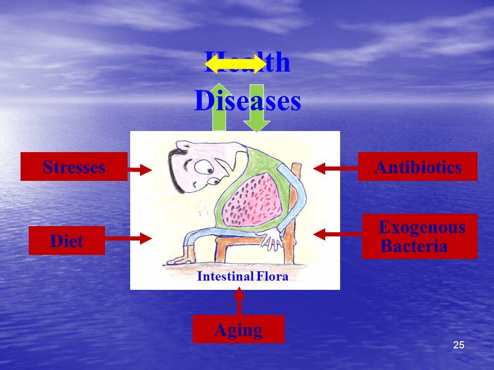 Health Diseases Stresses Antibiotics Exogenous Bacteria Diet Aging