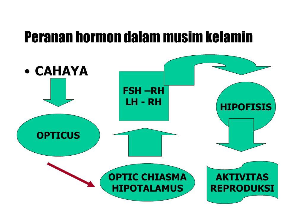 Peranan hormon dalam musim kelamin