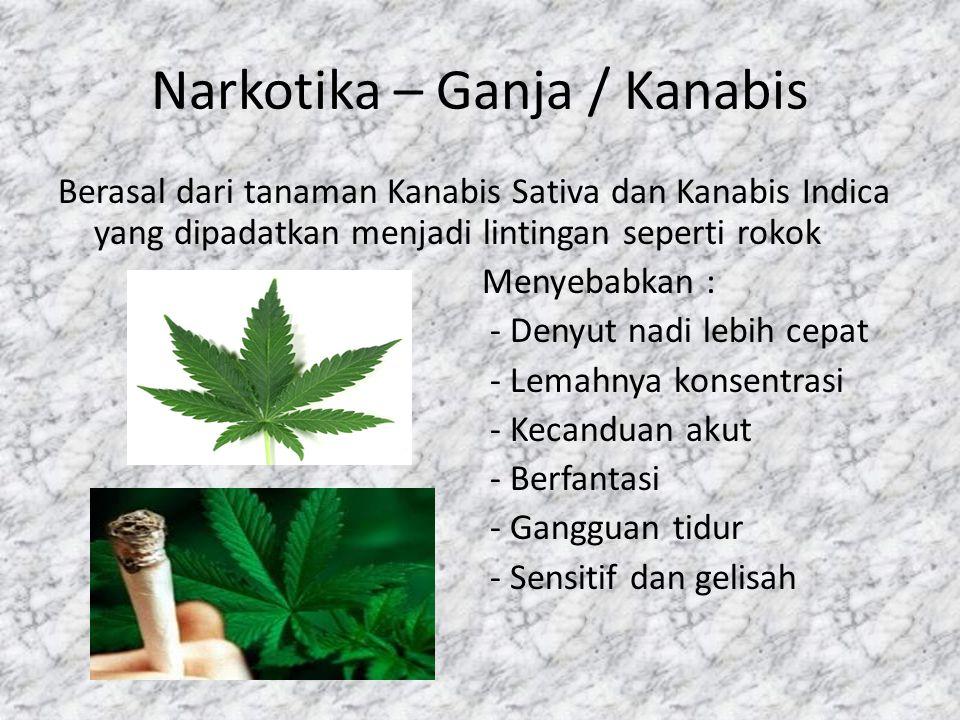 Narkotika – Ganja / Kanabis