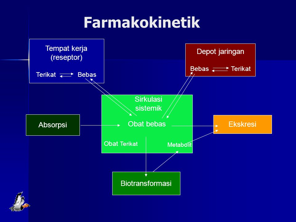 Farmakokinetik Tempat kerja (reseptor) Depot jaringan Sirkulasi