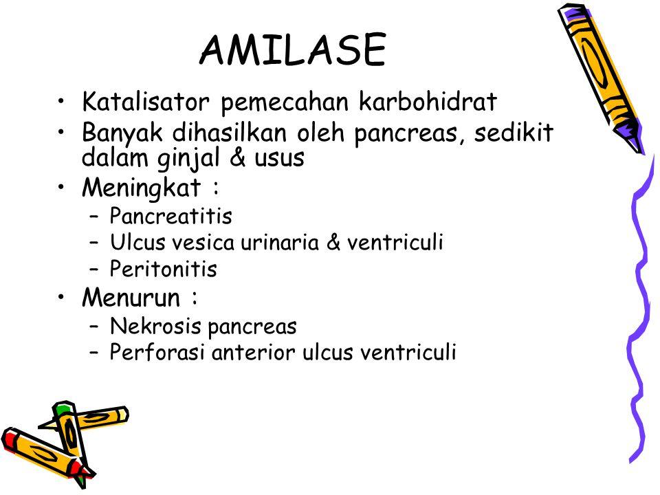 AMILASE Katalisator pemecahan karbohidrat