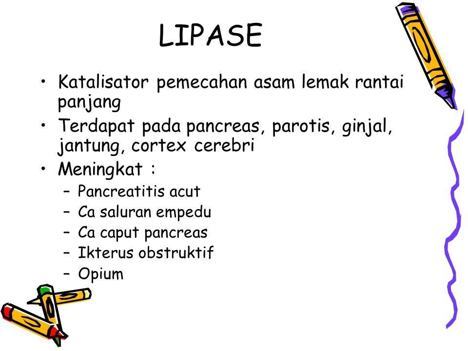 LIPASE Katalisator pemecahan asam lemak rantai panjang