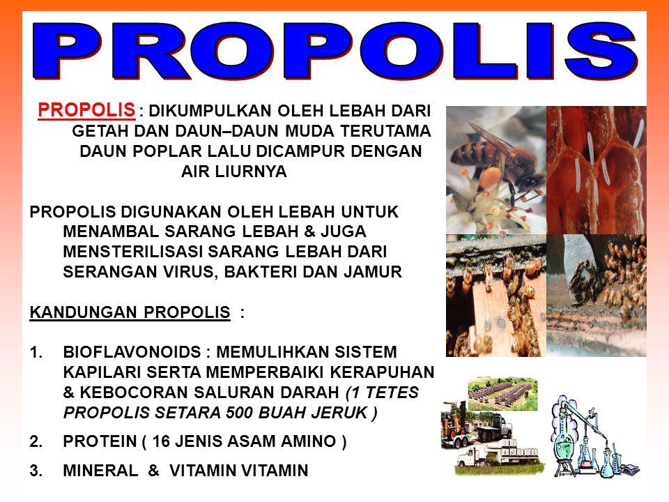 PROPOLIS PROPOLIS : DIKUMPULKAN OLEH LEBAH DARI GETAH DAN DAUN–DAUN MUDA TERUTAMA DAUN POPLAR LALU DICAMPUR DENGAN.