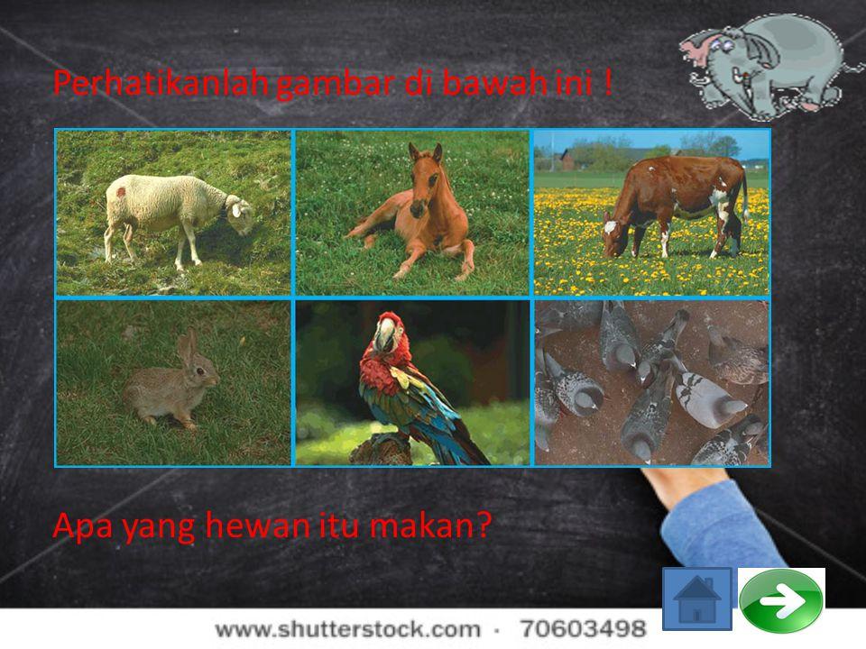 Perhatikanlah gambar di bawah ini ! Apa yang hewan itu makan