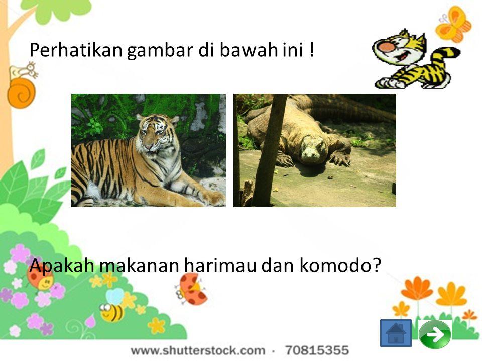 Perhatikan gambar di bawah ini ! Apakah makanan harimau dan komodo
