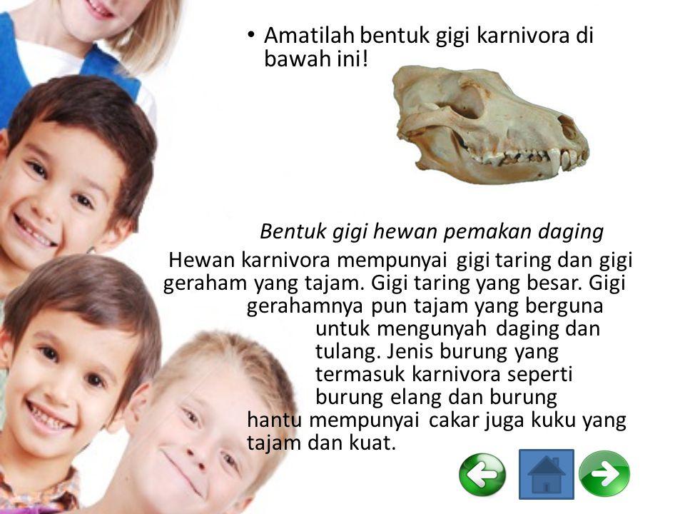 Amatilah bentuk gigi karnivora di bawah ini!