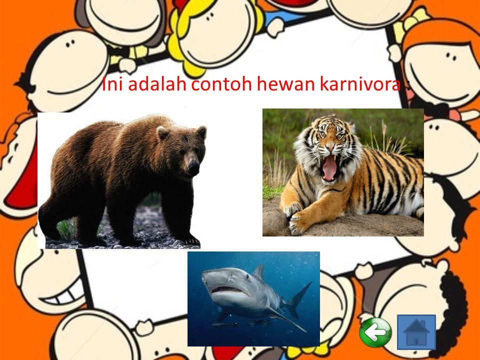 Ini adalah contoh hewan karnivora :