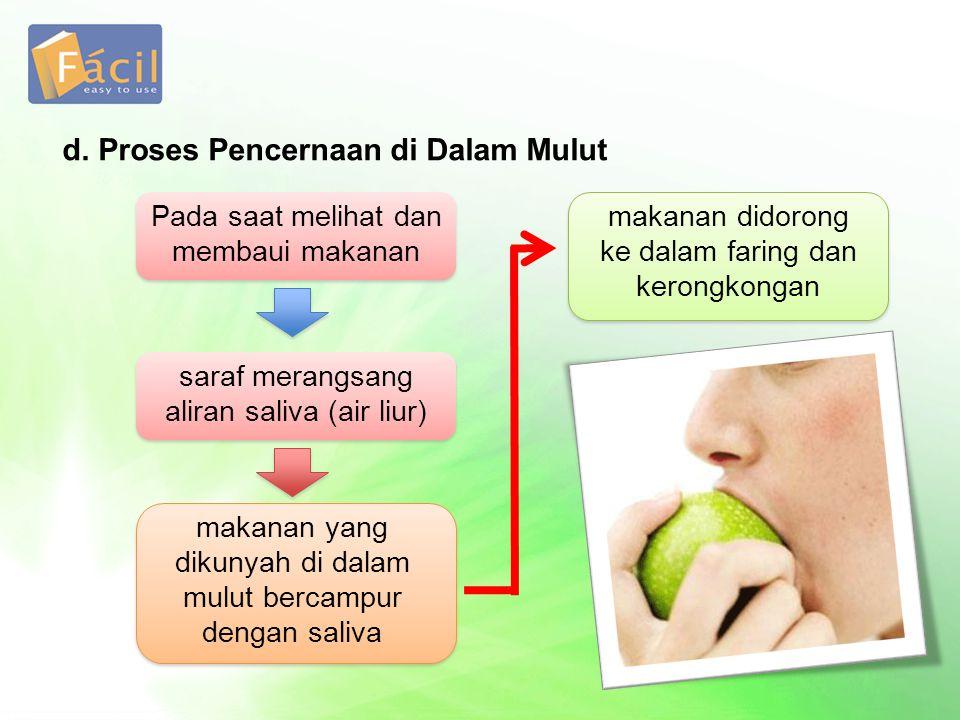d. Proses Pencernaan di Dalam Mulut