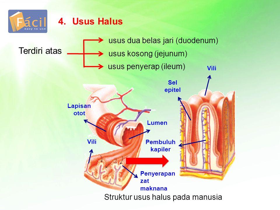 Struktur usus halus pada manusia